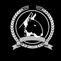 Logo Nou Chiorean Bull Terrier Kennel
